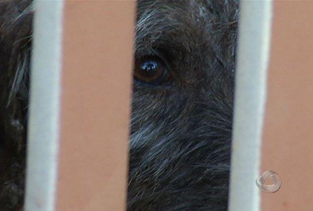 Cão teria sido 'esquecido' em casa de Campo Grande há um mês, diz ONG (Foto: Reprodução/TV Morena)