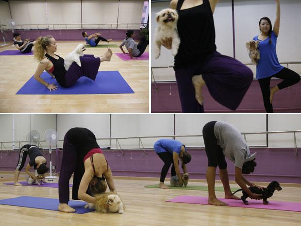 Os donos ou donas também se exercitam e ajudam os animais a realizarem as posições corretamente, com a ajuda da instrutora Suzette Ackermann, ao centro na foto superior esquerda. (Foto: Kin Cheung/AP)