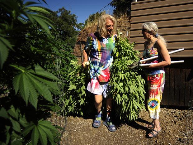 Produtores de maconha para uso medicinal cortam plantas no condado Mendocino (Foto: Joe Amon/The Denver Post)