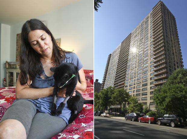 Miranda Schubert com o gato 'Gloucester', que sobreviveu a uma queda de 20 andares. (Foto: James Ambler/Barcroft USA/Getty Images)
