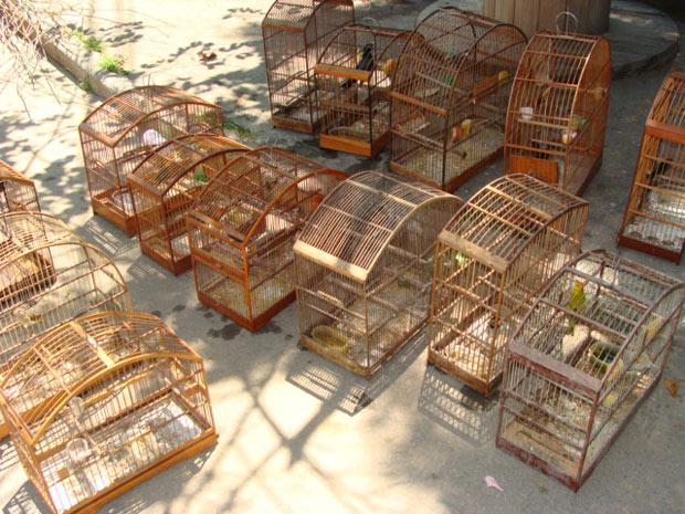 Pássaros foram apreendidos em feira livre, na Tijuca  (Foto: Foto: Divulgação / Polícia Militar)