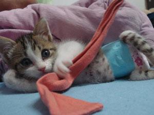 A gata Luciana teve o seu crescimento prejudicado após ter fraturado três vértebras quando ainda tinha dois meses de vida. (Foto: Arquivo Pessoal)