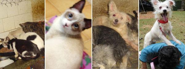 A gata Mariella e o cão Versace: eles viviam em péssimas condições e foram recuperados por uma ONG em São Paulo. Agora estão prontos para a adoção. (Foto: Editoria de Arte/G1)