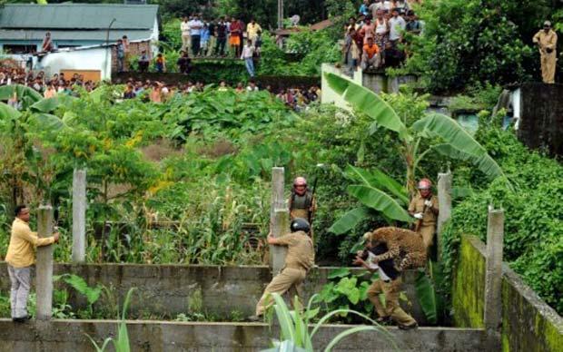 Várias pessoas acompanharam a tentativa de capturar o leopardo. (Foto: Diptendu Dutta/AFP)
