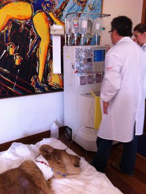 Biomédico e enfermeira iniciam tratamento utilizado em humanos em Ariel (Foto: Caroline Hasselmann/G1)