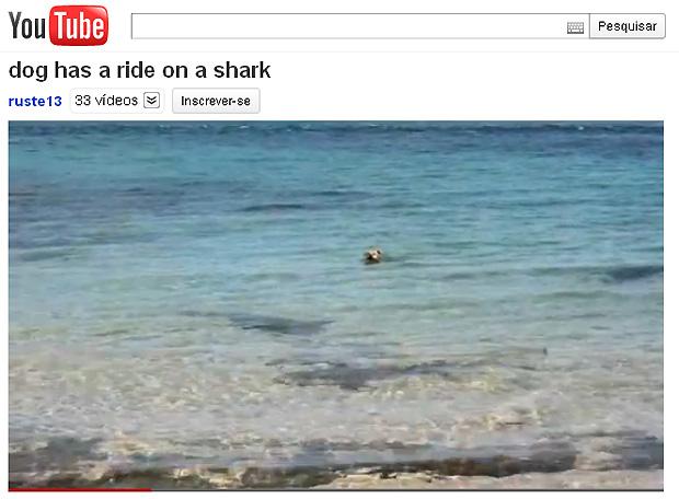 Víde de cão nadando com tubarões faz sucesso no YouTube (Foto: Reprodução/YouTube)