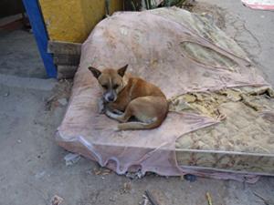 Famílias estão abandonando principalmente cães e gatos (Foto: Divulgação/Polícia Militar)