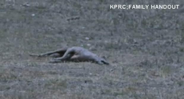 Adolescente disse ter matado um suposto 'chupacrabra' no Texas. (Foto: Reprodução)