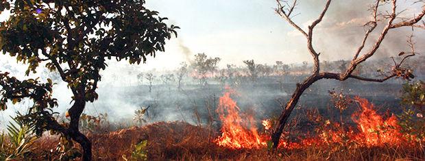Queimada em Mato Grosso (Foto: Guilherme Filho/Secom-MT)
