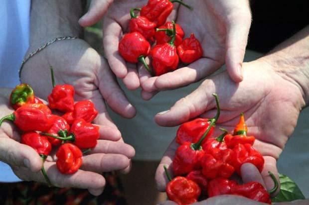 Pimenta cultivada na cidade de Mirisset é a mais ardida do mundo. (Foto: Alex de Wit/AFP)
