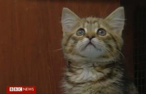 A gatinha Princess (Foto: BBC)