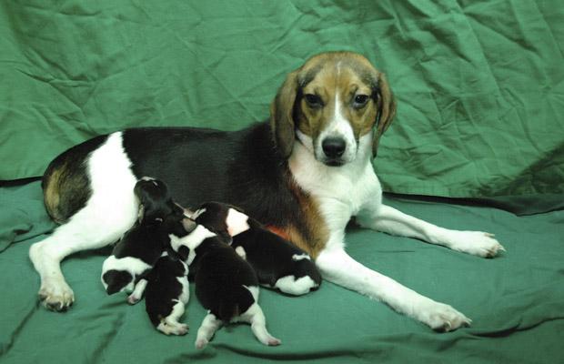 A cadela Tagon e seus filhotes (Foto: Reuters)