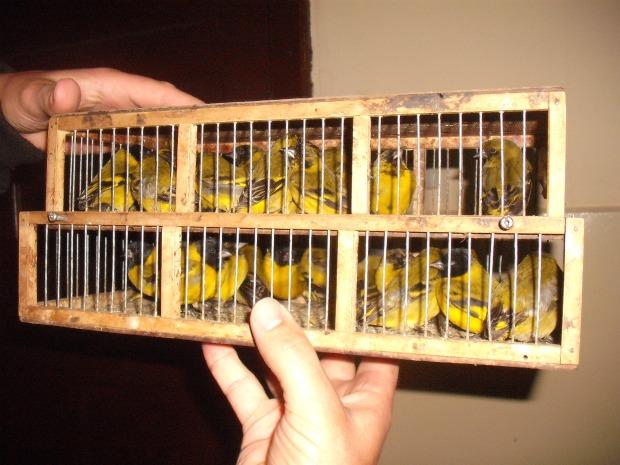 Pássaros eram transportados dentro de uma mala. (Foto: Divulgação Polícia Militar Ambiental)