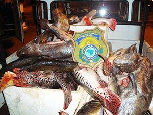 pescado apreendido em rodovias de Mato Grosso (Foto: Assessoria PRF/MT)