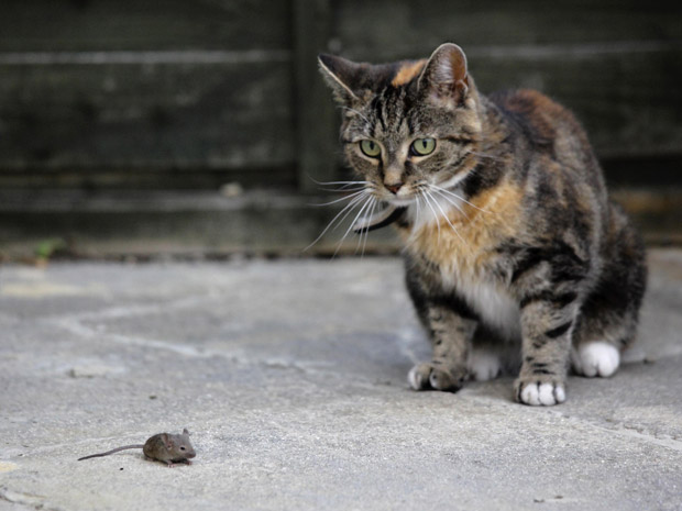 A gata Jess observa a 'caça' (Foto: REUTERS/Kevin Coombs)