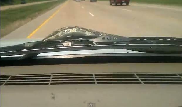 Rachel Fisher, de 26 anos, estava dirigindo a mais de 100 km/h quando réptil surgiu. (Foto: Reprodução)