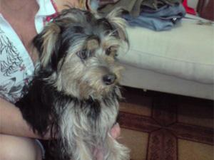 Giginho morreu em uma pet shop no Ipiranga (Foto: Divulgação/Arquivo Pessoal)