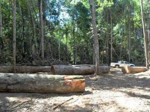Proprietário da área foi multado em R$ 168,2 mil. em MT.  (Foto: Assessoria/Sema)