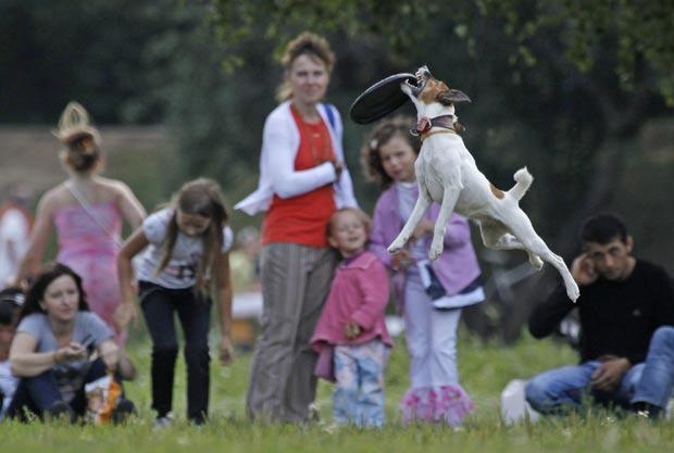 Cães disputaram competições de distância e precisão. (Foto: Sergei Karpukhin/Reuters)