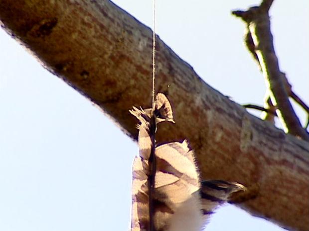 Segundo moradores, linha que prendeu coruja tinha cerol (Foto: Ari Melo/ TV Gazeta)