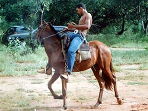 cavalo no cemitério (Foto: Arquivo Pessoal)