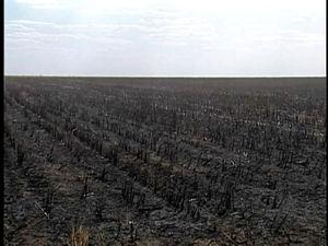 Fogo atingiu 200 dos 600 hectares de área. (Foto: Reprodução/TVCA de Sinop)