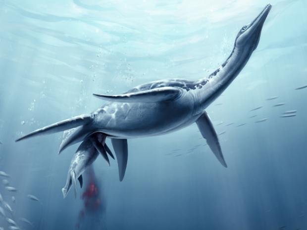 Ilustração de como seria o parto do plesiossauro (Foto: S. Abramowicz, Dinosaur Institute, NHM)