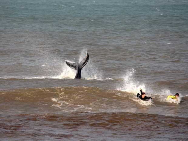 baleia (Foto: Lucas Saporiti/Agência RBS)