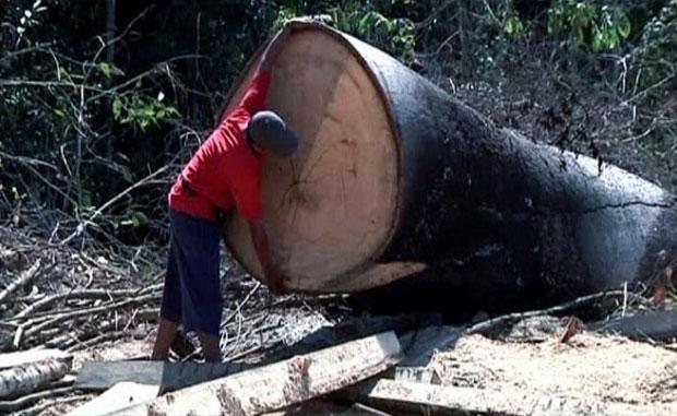 Manifestantes reclamam que o projeto vai destruir a biodiversidade local e a cultura de três etnias indígenas (Foto: BBC)
