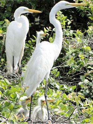 Pássaros são monitorados no Pantanal mato-grossense (Foto: Marcos Ferramosca/Sema-MT)