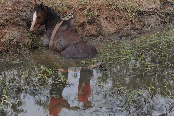 Cavalo foi retirado com ajuda de trator de brejo em SC (Foto: Charles Guerra/Agência RBS)