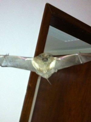 Moradora do 17º andar registrou as invasões dos morcegos (Foto: Isabel Paredes)