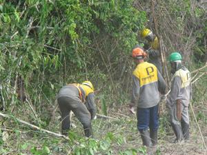 Além de tratores, trabalhadores fazem corte da mata manualmente com facões e motosseras (Foto: Mariana Oliveira / G1)