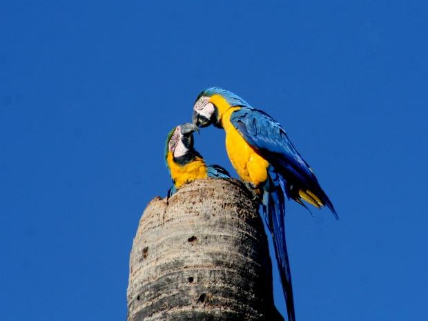 Exposição de fotos de arara em Campo Grande (Foto: Denílson Secreta)