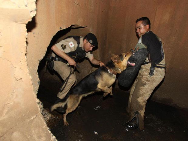 Cães treinam em esgoto de Uberaba, no Triângulo mineiro (Foto: L. Adolfo/ Futura Press)