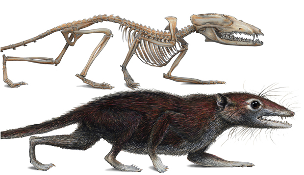 Ilustração mostra como seria o Juramaia sinensis ou 'Mãe Jurássica da China'. (Foto: N. Matsunaga)