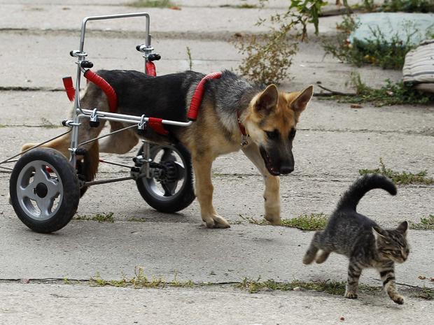 Cachorro recebe cadeira de rodas na Polônia (Foto: Peter Andrews / Reuters)