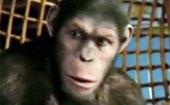planeta dos macacos (Foto: Reprodução)