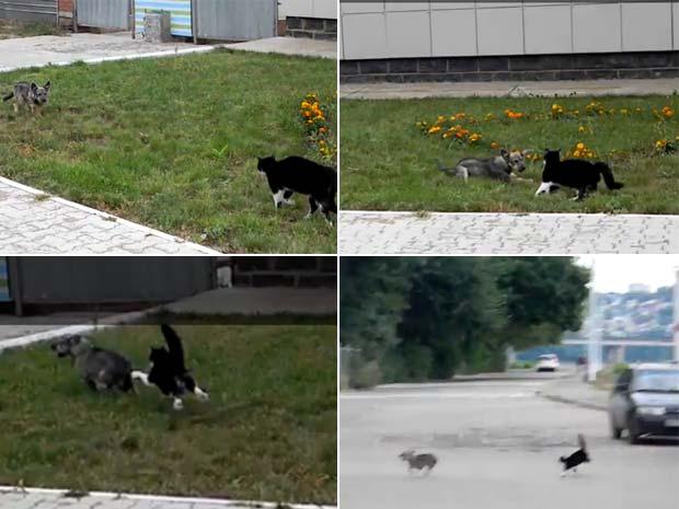Gato expulsa cão durante briga. (Foto: Reprodução)