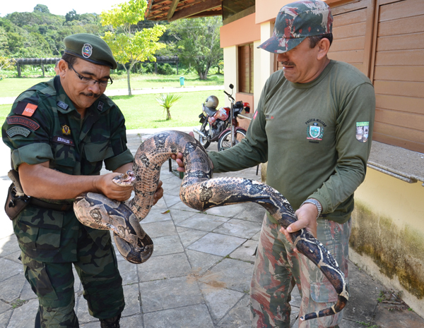 Cobra de 3m capturada na Paraíba (Foto: Walter Paparazzo/G1)