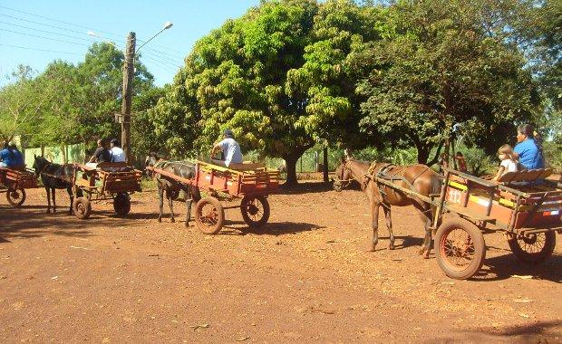 Carroceiro terá de se recadastrar e cavalo pode ganhar chip em MS (Foto: Divulgação/Departamento de Trânsito)