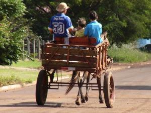 Carroceiro terá de se recadastrar e cavalo pode ganhar chip em MS (Foto: Divulgação/Departamento de Trânsito de Dourados)