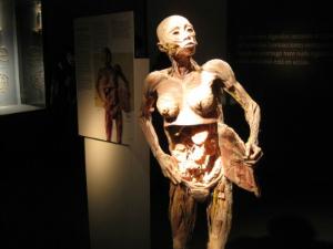 """""""O Fantástico Corpo Humano"""" traz uma uma visão geral do corpo, sistemas e órgãos (Foto: Divulgação)"""