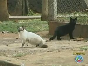 Polícia suspeita que animais tenham sido envenenados (Foto: Reprodução/TV Tem)