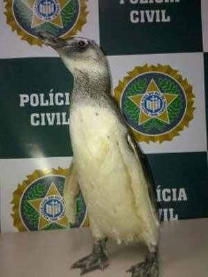 Pinguim é resgatado por policiais em casa de Maricá na Região dos Lagos. (Foto: Divulgação/Polícia Civil)