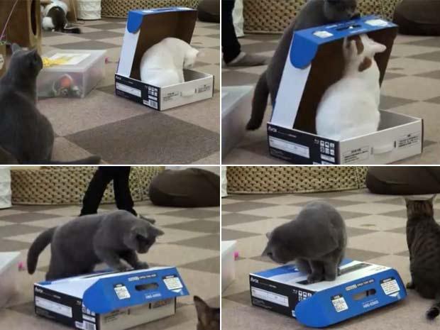Gato trancou rival dentro de caixa. (Foto: Reprodução)