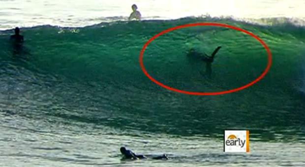 Imagem mostra tubarão ao lado de surfistas em San Diego. (Foto: Reprodução/CBS)