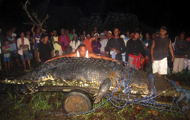 Crocodilo foi capturado em um riacho em Bunawan. (Foto: AP)