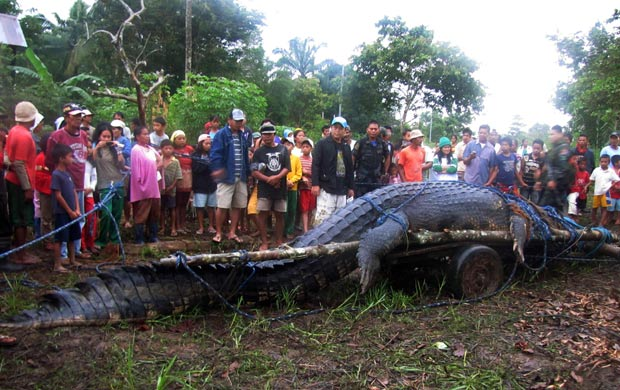 Captura do crocodilo gigante atraiu centenas de curiosos. (Foto: Reuters)