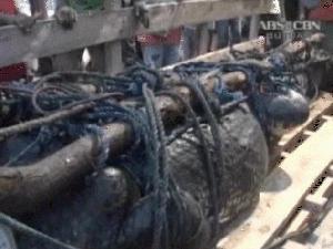 Crocodilo capturado tem mais de uma tonelada (Foto: BBC)